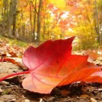 Beautiful-Autumn-Leaves-Wallpapers-and-Images-Free-Download-150x150